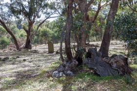headstones-pennyweight-childrens-cemetery-castlemaine