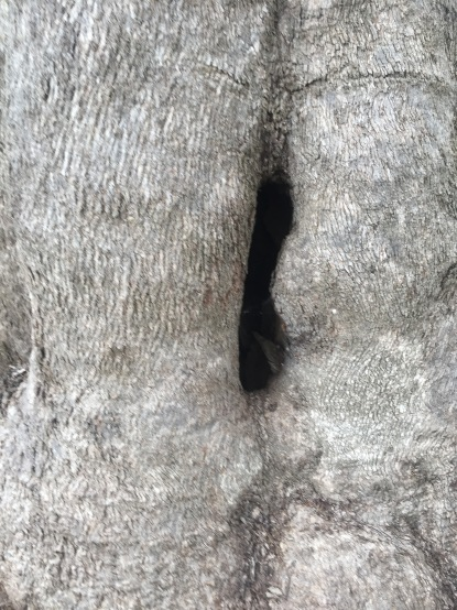 Scar Tree