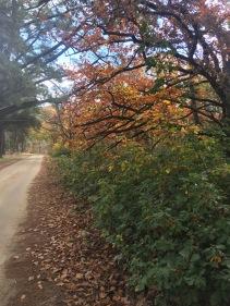 Oak Forest Autumn 2017