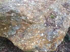 Forest Creek Digging