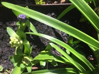 Flowers emerge