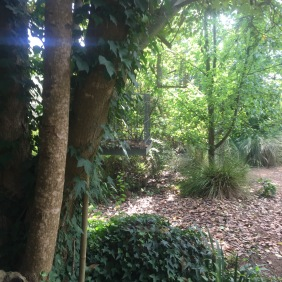 My Backyard Woodland
