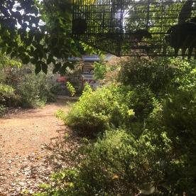 Backyard Woodland