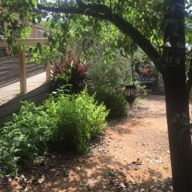 My Woodland
