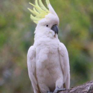 A proud distinctive bird